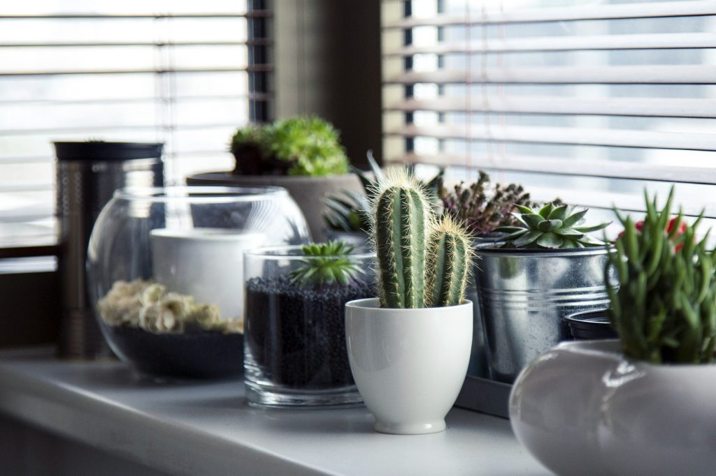 Home potted plants from local nurseries and garden centers